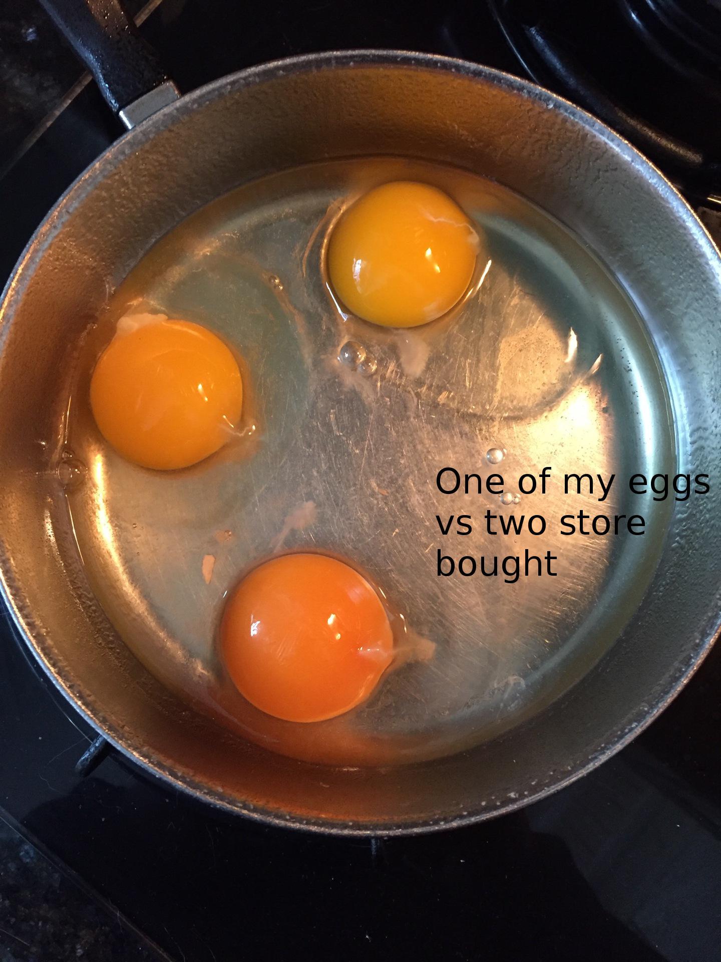 Store bought vs my egg